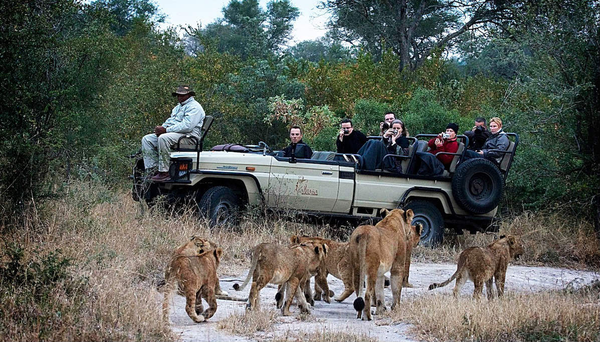 Zuid-Afrika-Arathusa-Game-Drive